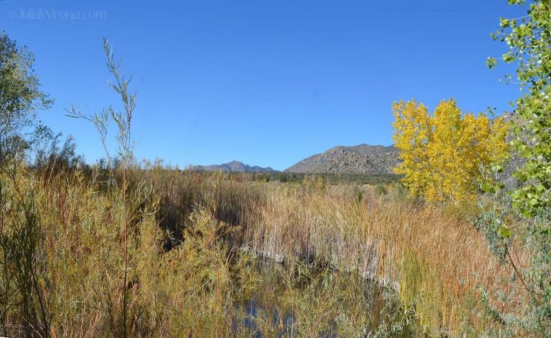 Sandia Foothills Open Space