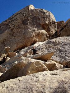 Julie high on a boulder in Joshua Tree