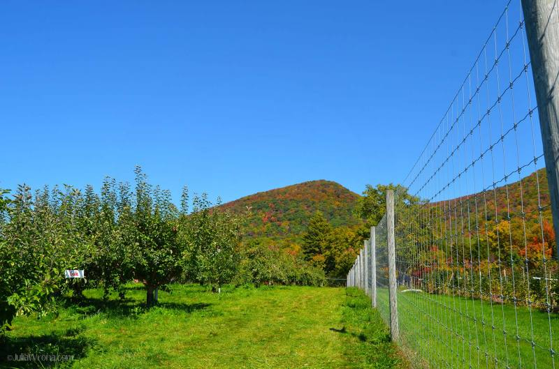 Vermont apple farm in Autumn
