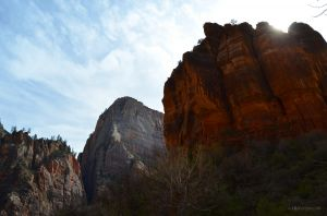 Looking Up in Zion