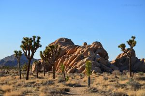 Joshua Tree National Park 01