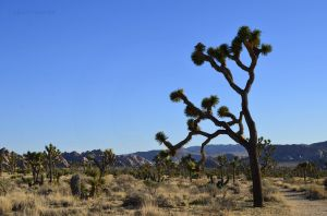 Joshua Tree National Park 02