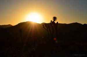 Sunset in Joshua Tree 01