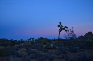 Fading Light in Joshua Tree