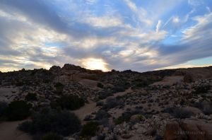Sunset Hike in Joshua Tree