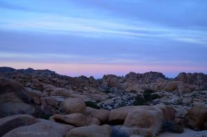 Sunset in Joshua Tree 03