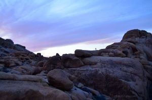 Sunset in Joshua Tree 02