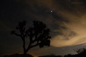 Night in Joshua Tree 01