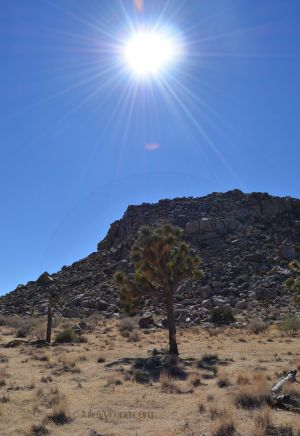 High Noon in Joshua Tree