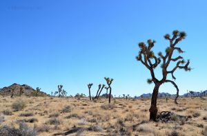 Joshua Tree National Park 04