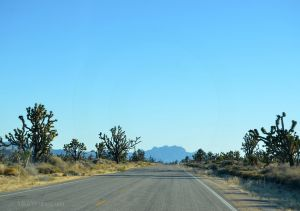 Driving through the Mojave National Preserve
