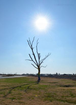 Painted Tree in Joplin