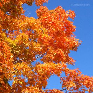 Orange Leaves Blue Sky