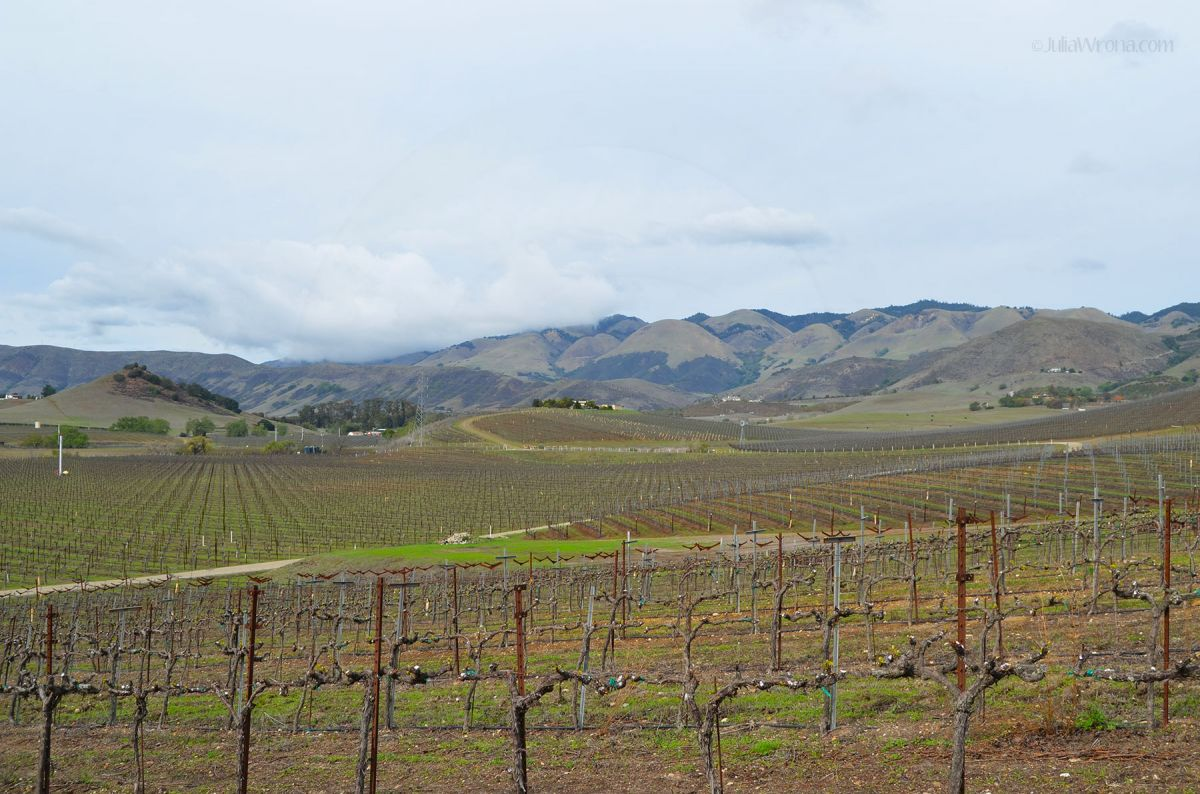 JKW_7770web Central Coast Vineyards.jpg