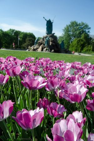 Flowers Behind the King Memorial Fountain