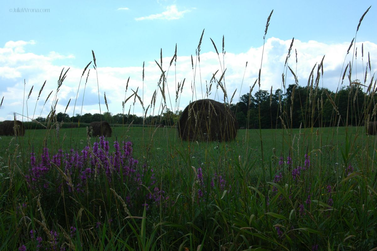DSC_0394web Flowers and Hay.jpg